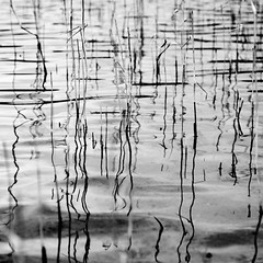 Reed Abstract (Boyd Hunt) Tags: bw abstract water grass reeds scotland blackwhite fineart loch