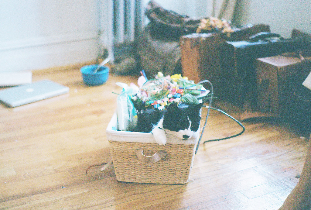 Pippin and Basket