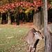#43 Wildlife Park
