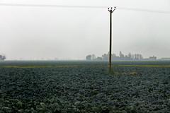 Boring Photography? ... (JonCoupland) Tags: mist tractor field rain weather boston jon boring photographs marshalls coupland cabages fishtoft