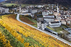 Chur - Weinberg (Marcel Cavelti) Tags: schweiz switzerland noir wine hometown herbst stadt chur bishop pinot wineyard reben wein trauben amedeo bischof graubnden grisons rieslingsylvaner cottinelli img6250bearb