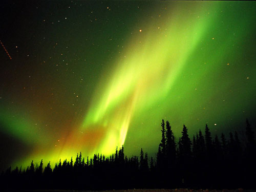 Aurora_by_David_Cartier_4.jpg