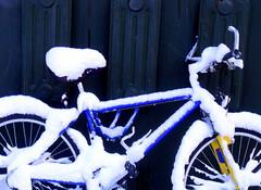 bike lock (dmixo6) Tags: trees winter sky snow canada muskoka dugg dmixo6