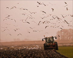 Gulls follow the plough (Foto Martien (thanks for over 2.000.000 views)) Tags: autumn mist tractor holland fall netherlands dutch fog nationalpark nevel gull herfst nederland till campo groningen mwe ploegen gaviota meeuw plough friesland champ mouette tracteur niederlande acker lauwersmeer trekker frysln najaar nationaalpark akker a550 cultivatedfield lauwersmar martienuiterweerd omploegen bestcapturesaoi martienarnhem sony70300gssmlens sonyalpha550 mygearandme mygearandmepremium mygearandmebronze mygearandmesilver mygearandmegold mygearandmeplatinum mygearandmediamond dblringexcellence fotomartien grinsln rememberthatmomentlevel4 rememberthatmomentlevel1 rememberthatmomentlevel2 rememberthatmomentlevel3 rememberthatmomentlevel5 rememberthatmomentlevel6