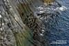 Snaefellsnes shs_n3_081494 (Stefnisson) Tags: sea summer landscape iceland cliffs og ísland sjór snæfellsnes strönd hafið stuðlaberg fjara klettar hnappadalssýsla stefnisson
