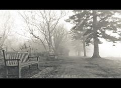Foggy or Misty ~ 325|365 (w.mekwi photography [on the road]) Tags: mist fog bench balloch hbm day325 project365 valeofleven ballochcountrypark nikond90 sigma1020mmdchsm benchmonday 2011inphotos wmekwiphotography