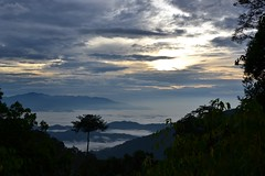 Sunrise and low clouds in Fraser hill (Christophe Maerten) Tags: cloud bird sol forest sunrise landscape highlands hill watching vogels malaysia fraser zon oiseaux bukit landschap peninsular burung aurinko maleisi schiereiland nevelwoud lunnit malaysiathailand2011