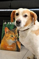 CATS AND DOGS... friends or enemies? ...or simply DIFFERENT? (dimitra_milaiou) Tags: world life city friends 2 two dog cats black color green love animal yellow cat greek reading one 1 book photo nikon kitten waiting europe colours different bokeh d picture hellas kitty kittens athens read greece health together krista veterinarian shape pure 90 stay athina dimitra d90 φιλοι αθηνα ελλαδα γατα δυο σκυλοσ βιβλιο γατεσ ζωα σκυλια σκυλοι ενα δημητρα υγεια κριστα milaiou μηλαιου γατια