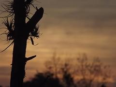 Detalhe (vineusio) Tags: sol sunrise landscape fuji laranja finepix manhã nascerdosol s4000