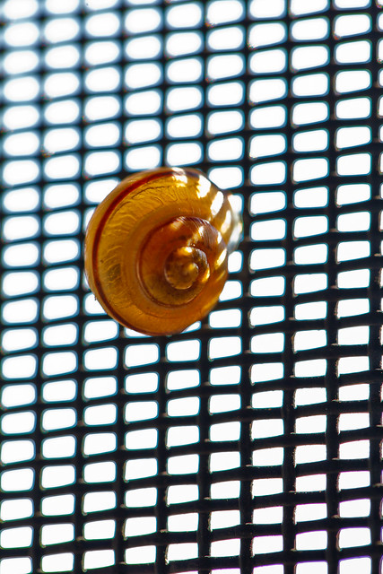 263/365 - September 20, 2011 - Snail Screen