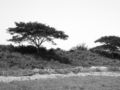 West Gate (Ruins) of Sisupalgarh (nbg90455) Tags: blackandwhite bw india orissa mjb dhauli sisupalgarh