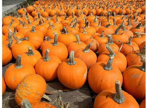 pumpkinlittles