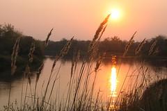 Sunset on Klyazma river (yuriye) Tags: sunset sun reflection water river gold russia закат вода солнце река klyazma клязьма yuriye колосья
