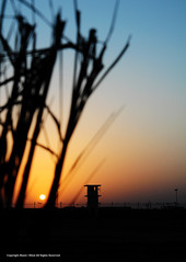 Sunset in Desolation (Manic~Mind) Tags: blue sunset orange sun tower leaves silhouette fence dark sundown iraq fencing watchtower guardtower
