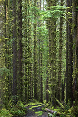 Olympic National Park #1 (landscape photography - sebastien-mamy.fr) Tags: seattle usa forest landscape washington nationalpark unitedstates olympic paysage foret etatsunis sebastienmamy