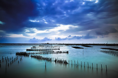 Oyster racks / Z (kth517) Tags: taiwan tainan    qigu oysterracks z