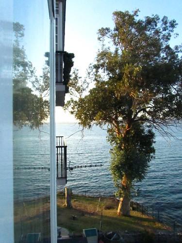 Árbol en la ventana by JoseAngelGarciaLanda
