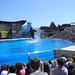 Sea World with SYR - 044
