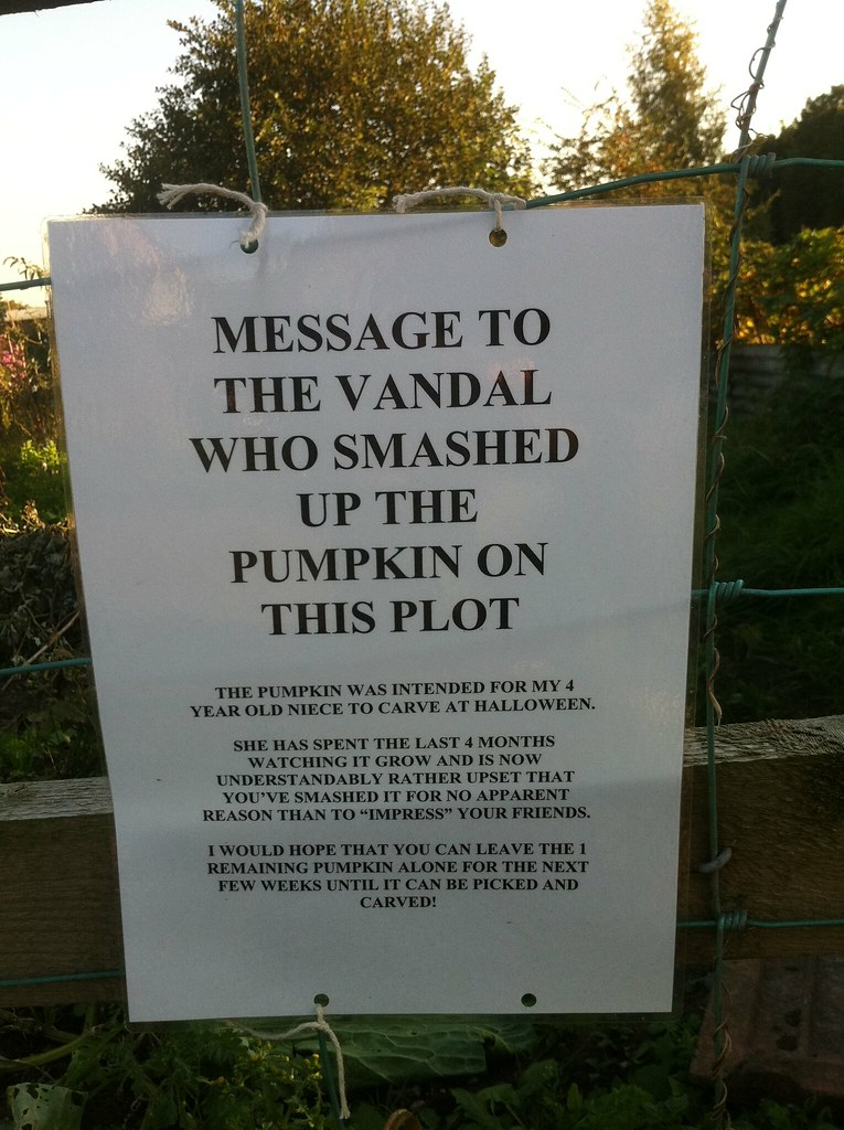 MESSAGE TO THE VANDAL WHO SMASHED UP THE PUMPKIN ON THIS PLOT: The pumpkin was intended for my 4 year old niece to carve at Halloween. She has spent the last 4 months watching it grow and is now understandable rather upset that you've smashed it for no apparent reason than to