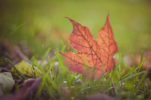 306:365 Autumn leafy goodness