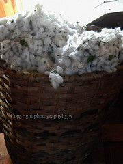 Raw Cotton in Wicker Basket North Carolina (Photographybyjw) Tags: raw basket farming north cotton spinning carolina growing agriculture wicker handwork ginning