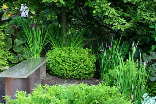 bench and iris