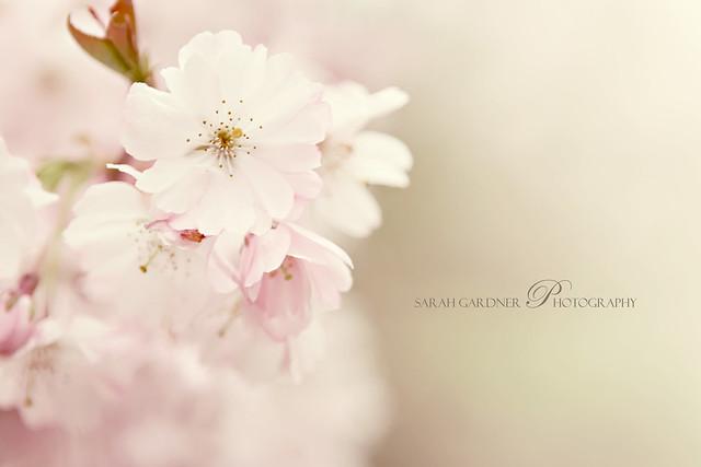 Floral_blog_020