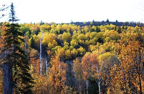 tree top beauty