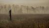 Foggy Morning at Cades Cove (Judy Rushing) Tags: trees nature fog dawn smokymountains cadescove ngm herowinner ultraherowinner thepinnaclehof npgm tphofweek122