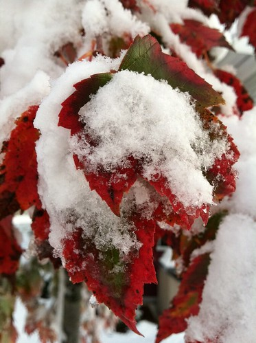 this is why so many folks lost electricty from the heavy snow...most of the trees still had beautiful fall foliage!