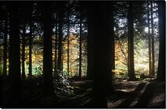 Dark Woods of Calderglen ( Jamie Mitchell) Tags: park autumn trees green dark season scotland woods niceshot glasgow south magic country east lanarkshire calderglen kilbride