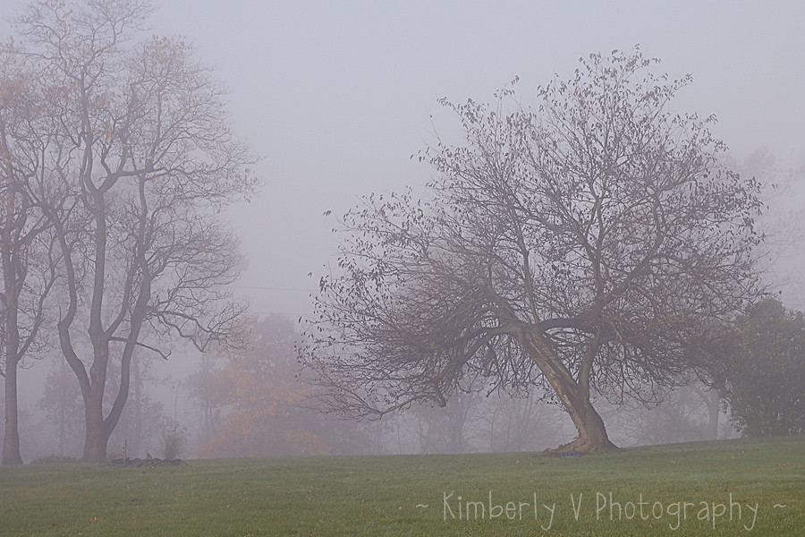 November 1 foggy morning