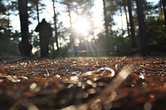 autumn walk (alina.) Tags: wood autumn trees dog sun sunlight man tree sparkles forest canon way focus bokeh walk tommy weeks sunrays texel 52 oof 52weeks autumnwalk 2852 bokehlicious pathscaminhos creativecollection bokeeeeh canon550d canoneos550d alinacerny