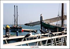 Olho (raulmahon) Tags: portugal puerto mar barco pasarela embarcadero algarve gaviota olho