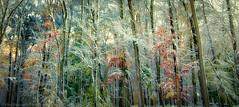 Autumn Colors Battles Snow Storm (aLeXpOs) Tags: autumn snow seasons unitedstates connecticut snowstorm northamerica danbury
