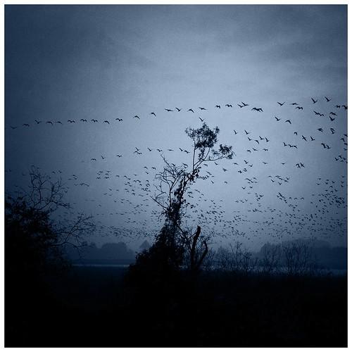 Bird song #39 by ichiro.k