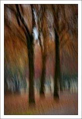 Intentional (Gies!) Tags: camera autumn fall landscape movement herfst icm beweging cameramovement intentional project365 flickraward intentionalcameramovement flickraward5 ringexcellence