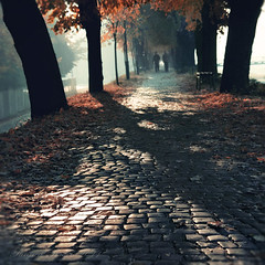 November Walk. Friends. Tanjica Perovic Photography. (Tanjica Perovic Photography) Tags: morning autumn trees friends light two people mist nature leaves fog bench walking alley shadows friendship path serbia quay cobblestone getty comfort walkers gettyimages srbija companionship floodbarrier kej kaldrma pirotskikej purot tanjicaperovicphotography availableforlicensingongettyimages barrieragainstflooding svetozarmisirlic floodingprotection