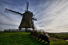 Molen het Noorden (johan wieland) Tags: mill texel molen noord muhl