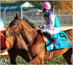 Midday (Shazstock) Tags: horse cup sport grey bay mare racing kings chestnut colt stallion thoroughbred filly breeders