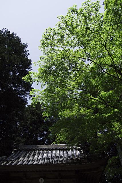 110521_103729_関ヶ原_島津義弘陣地跡