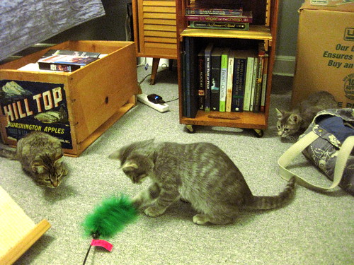 Three kittens. The big gray one is playing with a feather toy while the other two are crouched and ready to pounce.