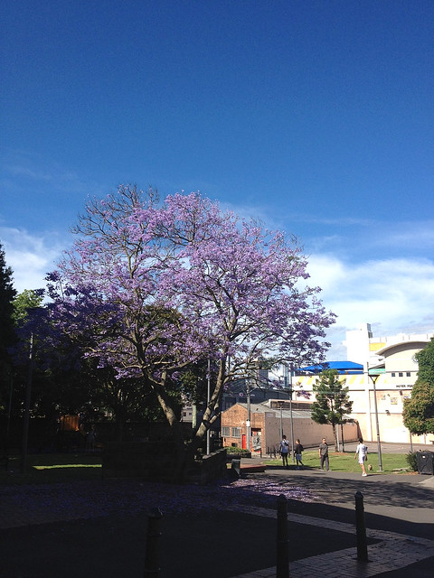 Season of the Purple Trees