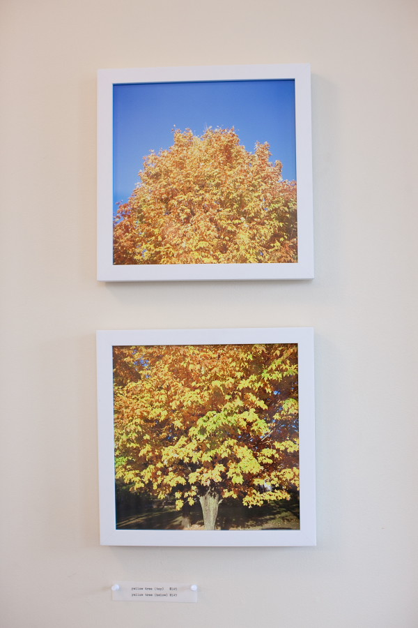 the yellow tree series