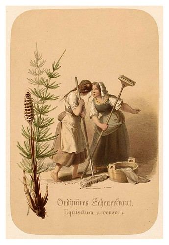 006-Mezcla de hierbas vulgares-Illustrirtes Kräuterbuch –Aquarelle- 1870-Adolf Schroedter
