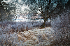 Five Year Development (jasontheaker) Tags: winter lake cold grass forest frost lakes lakedistrict freezing derwentwater beech skiddaw