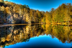 Autumn in Yedigller, Bolu (Nejdet Duzen) Tags: trip travel autumn lake reflection tree nature turkey trkiye bolu aa gl yansma turkei naturesfinest sonbahar seyahat doa yedigller saariysqualitypictures mygearandme ringexcellence