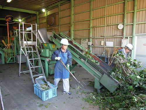 久喜宮代衛生組合 剪定枝資源化設備 剪定枝を破砕機に投入。