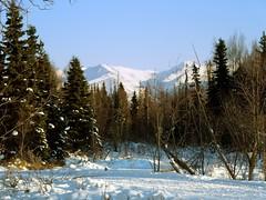 Winter in Anchorage (MarculescuEugenIancuD60Alaska) Tags: alaska anchorage amiamoci saariysqualitypictures fleursetpaysages