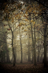 Looking for something (MMortAH) Tags: york autumn trees mist fall fog 50mm nikon yorkshire 14 north nikkor piece afs rowntreepark d90